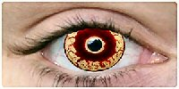 zombiecontacts