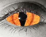 orange species contact lenses